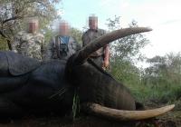 elephant-hunting-35
