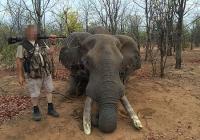 elephant-hunting-41