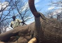 elephant-hunting-42