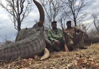 elephant-hunting-43