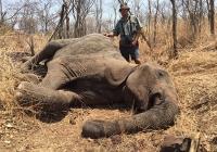 elephant-hunting-45