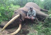 elephant-hunting-50