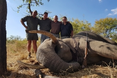 Elephant-105