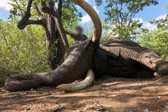 Elephant-109