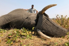 Elephant-119