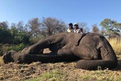Elephant-120