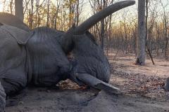 Elephant-141