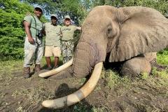 Elephant-146