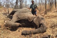Elephant-70