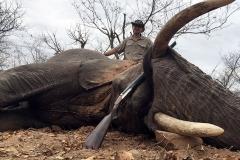 Elephant-75