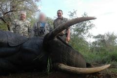 Elephant-82