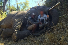 Elephant-85