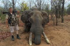 Elephant-89