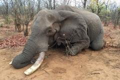 Elephant-90