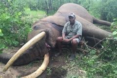 Elephant-99