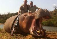 Hippo-20