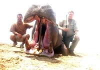 Hippo-21