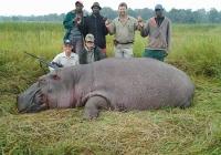 Hippo-23