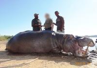 Hippo-26
