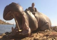 Hippo-29