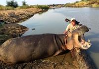 Hippo-35
