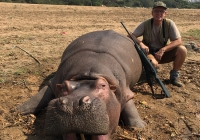 Hippo-44