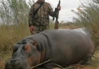 Hippo-46
