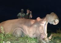 Hippo-47