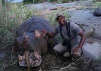 Hippo-50