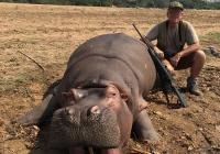 Hippo-44-New