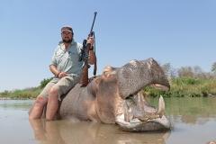 Hippo-31