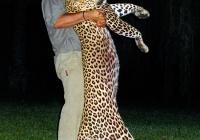 Leopard-21