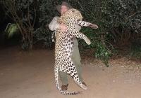 Leopard-27