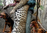 Leopard-33