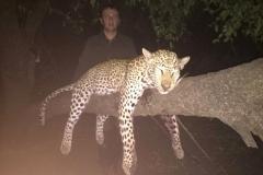 Leopard-28