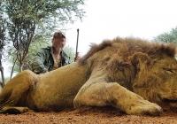 Lion-23