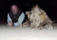 lion-hunting-01
