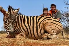 Zebra-50