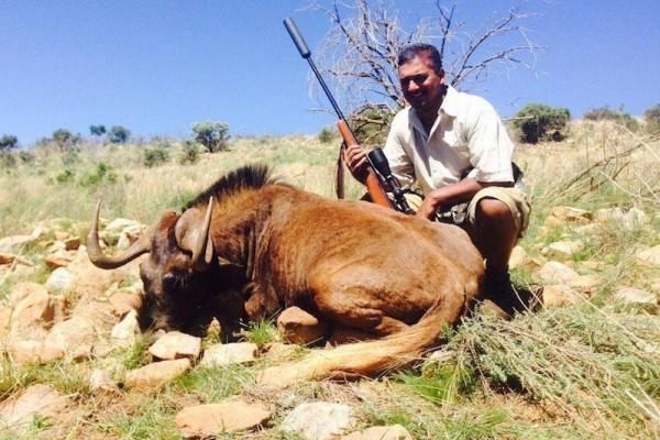 Black Wildebeest Hunting