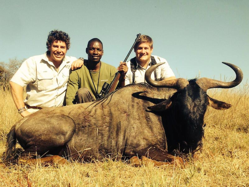 Blue Wildebeest Hunting