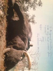 Toni signed Photo