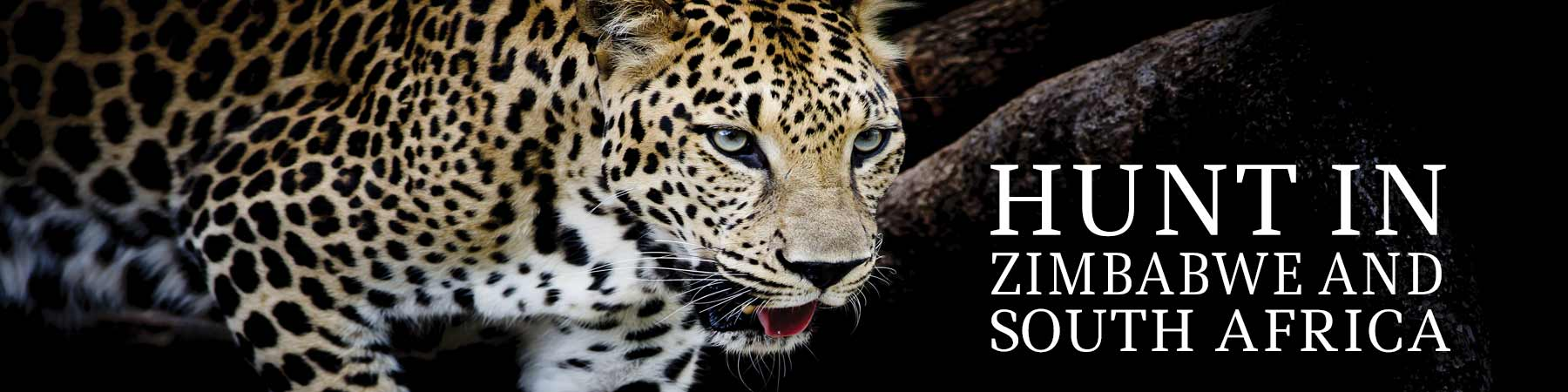 Website-Banner-Leopard-1