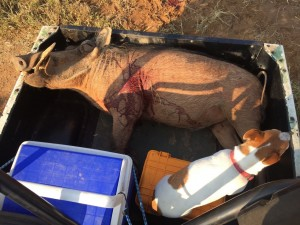 warthog loaded on side by side