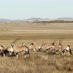 Philippolis Lodge Hunting