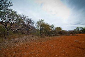Serengeti Limpopo