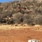 JWK Safaris Omaruru