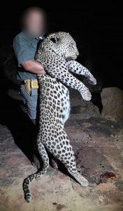 Leopard Hunting