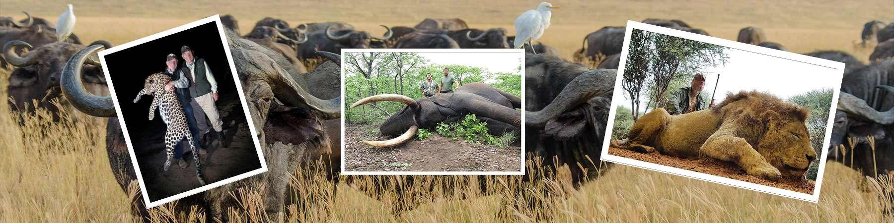 buffalo-hunting