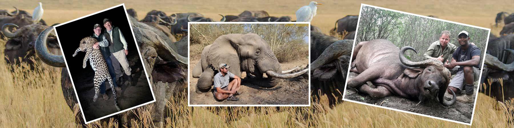 Home-page-leopard-elephant-buffalo-banner-2