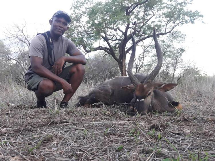Nyala Hunting Gallery